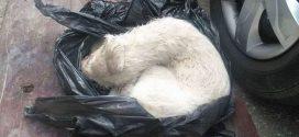 Kukazsákból mentették ki a halálra ítélt kutyust Erdélyben