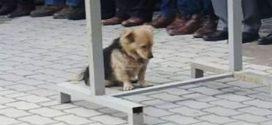 Minden nap gazdája sírjánál virraszt az összetört szívű kutyus