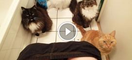 Ezt nem bírod ki nevetés nélkül – Vicces macskás videók