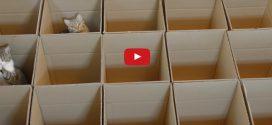 Kartondoboz-labirintusban játszó huncut cicáknál ma már nem lesz cukibb