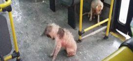 Átázott kóbor kutyákat engedett fel melegedni a buszra a jószívű sofőr