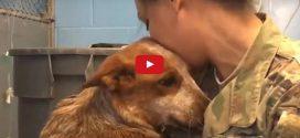 Te is megkönnyezed a pillanatot, mikor az elveszett kutyus újra találkozhat gazdájával