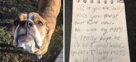 Szívszorító üzenettel hagyták a menhelyen ezt a szeretnivaló kutyust