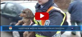 Autóból kidobott kutyát mentettek a pápai rendőrök