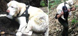 Nyolc nap után találták meg az elkóborolt, vak kutyust
