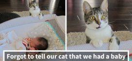 Elfelejtettek szólni a macskának, hogy kisbabájuk születik – Látványos első alkalmak az állatok életében