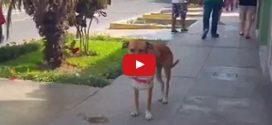 Üres vödröt cipelve kutat víz után ez a szomjas kóbor kutyus