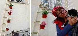 Létrát készített a néni a kóbor cicáknak, hogy bármikor meglátogathassák őt, ha fáznak