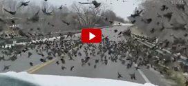 Lusta volt lassítani – Elütött egy egész madárrajt