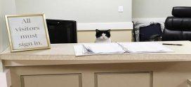 Ő itt Oreo, a cica, akinek fontos munkája van az idősek otthonában
