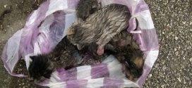 Szatyorba csomózva dobták a kukába az újszülött cicákat Budaörsön