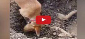 Segített eltemetni elgázolt társát a végletekig hűséges kutyus