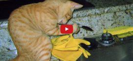 Bemutatunk egy macskát, akinek egy kanál a mindene