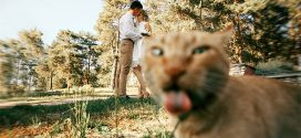 15 alkalom, amikor macskák tettek tönkre egy tökéletes fényképet