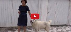 Minden nap sétál egyet elhunyt gazdája kedvenc útvonalán ez a hűséges kutyus