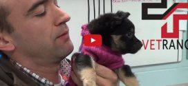 Aprócska gipszet kapott az út széléről mentett, pulóveres kiskutya