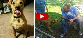 Megkönnyezed a videót, amiben nem ismeri fel gazdáját a kutyus, csak mikor közelebb merészkedik
