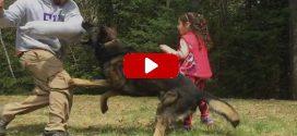 Fenevadként védi a támadótól a kislányt a kutya.