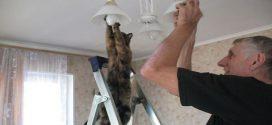 Macskák, akik tényleg furcsán viselkednek