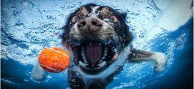 Szuperjó víz alatti kutyus portrétok.