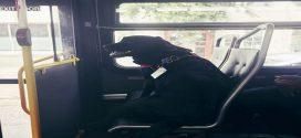 Ez a kutya minden nap egyedül buszozik a parkba