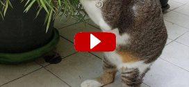 Egy thai nő talált rá egy sikátorban, azt gondolván, hogy ő egy macska. De miután felvette, rájött, még soha nem látott ilyet.