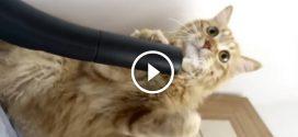 A macska reakciója a porszívóra a legviccesebb amit ma látni fogsz