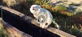 Futás közbe a férfi megpillantott egy árva kutyát. A kutya reakciója mélyen megérintette!