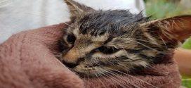 Videón a lefolyóban rekedt piliscsabai kiscica megmentése