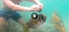 Egy halat próbál kiszabadítani a hálóból, de figyeljétek ki asszisztál a szabadításnál