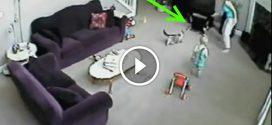 Macska menti meg a kisfiút édesanyjától!