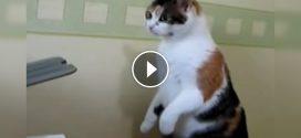A cica értetlenül figyeli ahogyan a nyomtató elnyeli a lapokat. Ahogy reagál rá az nagyon vicces!