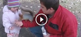 Apuka kislányának ad egy mogyorót a zacskóból. Figyeld hova dugja a mókus.