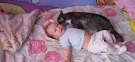 A baba sír és toporzékol az ágyában… Nézzétek mit csinál a cica pár pillanattal később!