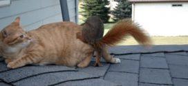Mókus újbóli találkozása a cicával, akivel felnőtt