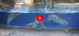 Ilyen érdeklődve nézegetnek a delfinek két mókust