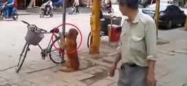 A kutya őrizte a gazdi biciklijét. De nézd mi történik amikor a férfi visszatér…