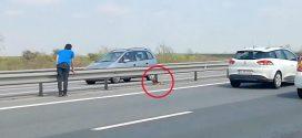 Mindenki látta, hogy mi van az autópálya közepén, de nem tettek semmit. De szerencsére ez a férfi is arra járt!