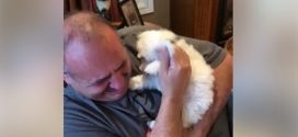Így gyógyul a férfi szíve 2 kutyája elvesztése után