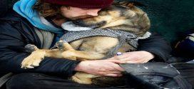 Szívszorító képek a kutyák hűségéről