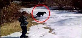 A család nem bírta ki nevetés nélkül, amikor meglátták mit művel kutyájuk a hóban!