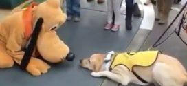 Ez a kutya először találkozik Plutoval- nézzétek mit csinál, amikor felismeri a pillanat fontosságát