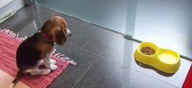 Még csak 3 hónapos, de már most elismerésre méltó amit tud ez a kutyus