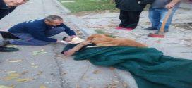 Nem mozdult el balesetett szenvedett gazdájától a kutyus