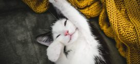 21 boldog cica, aki a te arcodra is mosolyt varázsol