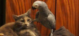 A világ legtürelmesebb macskája-legalábbis egy ideig