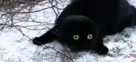 A macska, akit a végletekig lesokkolt a hó.