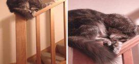 Bárhol, bármikor aludni- ez a macskák egyik specialitása