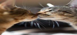 Összebújós szerelmes cicák a mai nap sztárjai