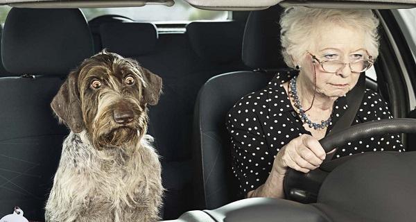 65 év felett bevonhatják a jogosítványt, mert komoly veszélyt jelentenek az idős sofőrök az utakon? Ön mit gondol?